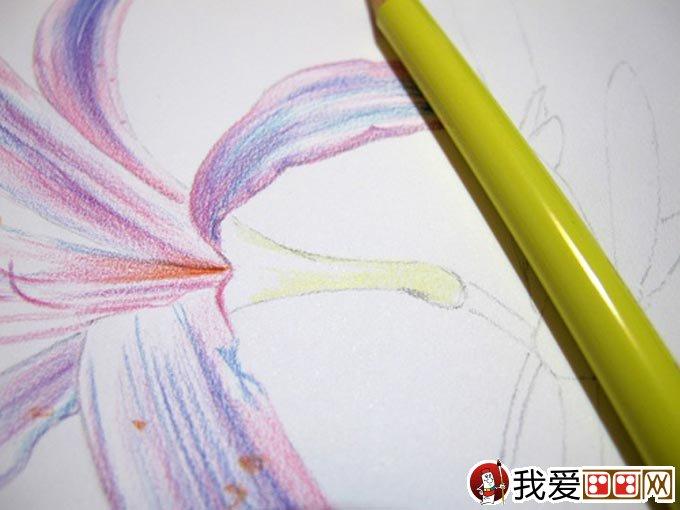 彩铅画花卉绘画教程 彩色铅笔画石蒜的手绘过程 10