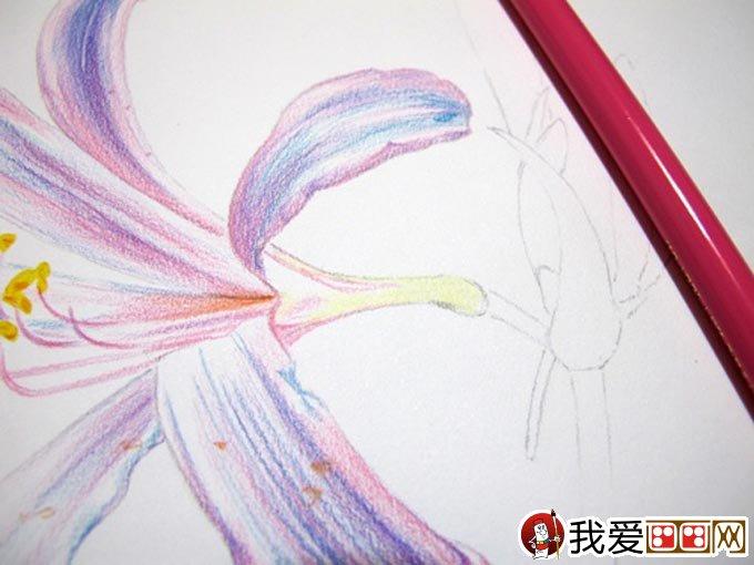 手绘彩铅画花卉绘画教程18