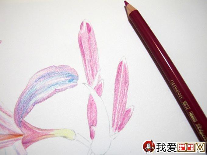 手绘彩铅画花卉绘画教程22