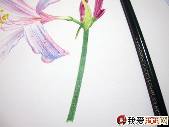 手绘彩铅画花卉绘画教程28