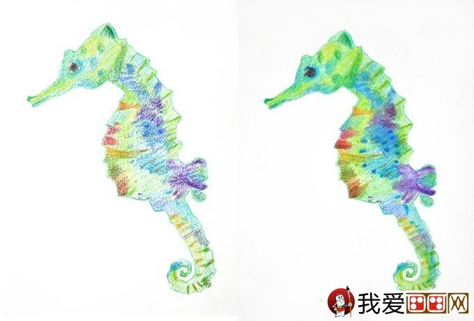彩铅画海马绘画教程:海马的画法图文步骤(2)