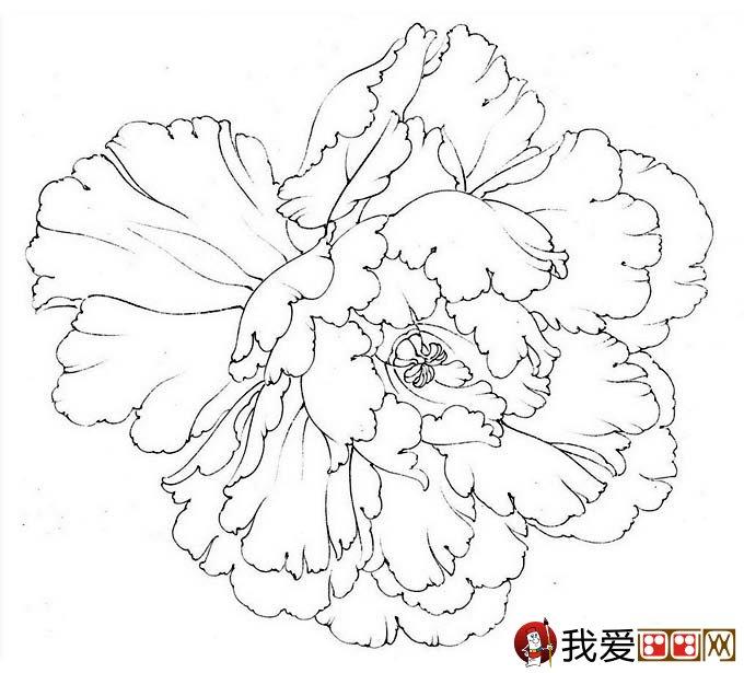 牡丹花头的设色教程 李晓明工笔牡丹技法解析图片