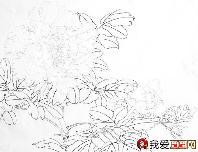 工笔白牡丹设色步骤_李晓明工笔花鸟画技法讲座教程