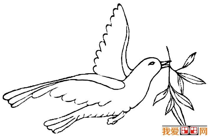 毕加索 和平鸽 毕加索12副和平鸽简笔画原图赏析
