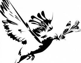 毕加索《和平鸽》_毕加索12副和平鸽简笔画原图赏析