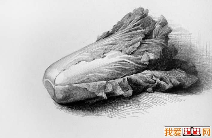 有白菜的静物素描组合
