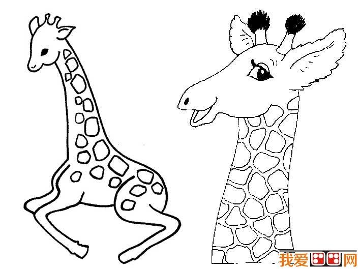 长颈鹿简笔画图片大全_儿童画教程_学画画_我爱画画网