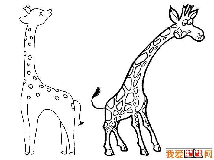 长颈鹿简笔画图片大全,有关长颈鹿的儿童简笔画图片