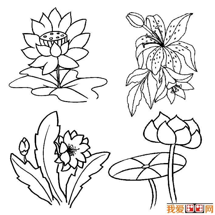 花朵简笔画图片大全,各种各样的花儿简笔画-儿童简笔画图片大全,图片