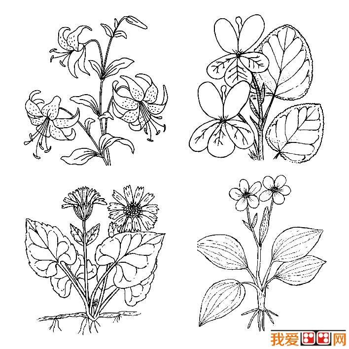花朵简笔画图片大全,各种各样的花儿简笔画 2