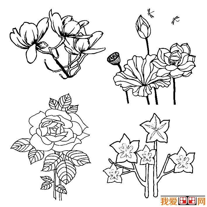 花朵简笔画图片大全,各种各样的花儿简笔画