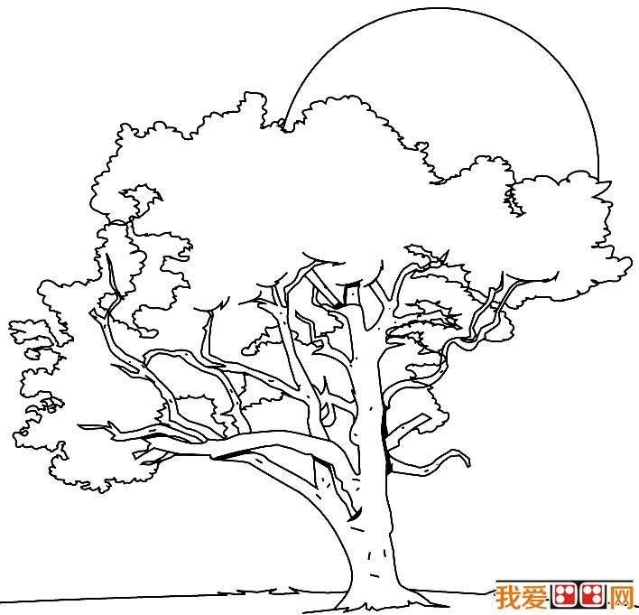 大树简笔画,各种各样的树简笔画图片