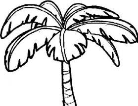 关于树叶的简笔画,各种树叶简笔画图片 4