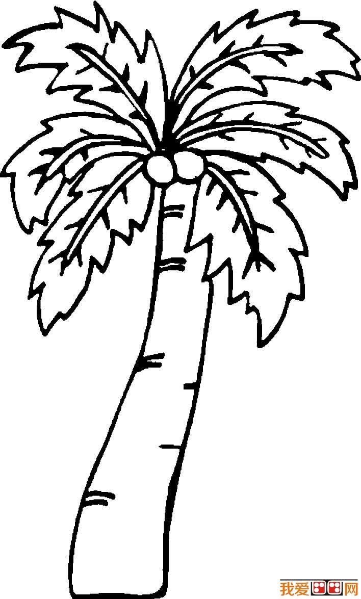 椰树简笔画,椰子树简笔画图片大全(3)