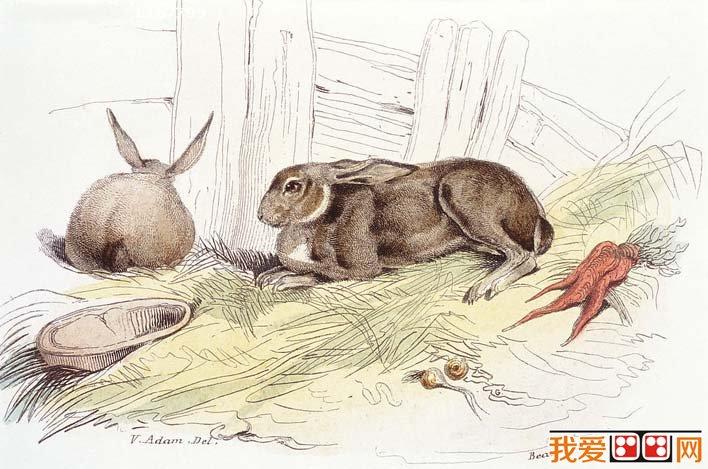 国外大师彩色钢笔素描画(02):兔子钢笔画