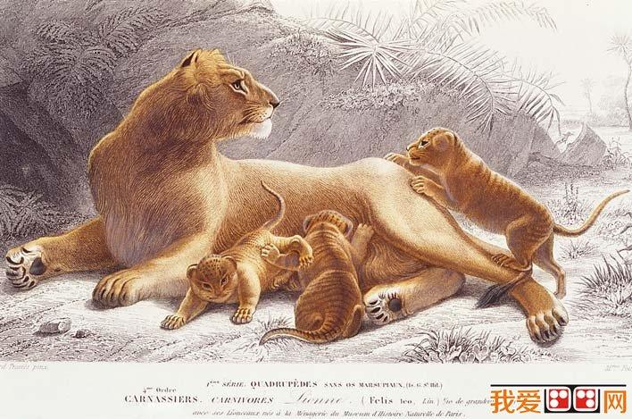 学画画 素描教程 素描风景 > 国外大师彩色钢笔素描画,各种动物彩色钢