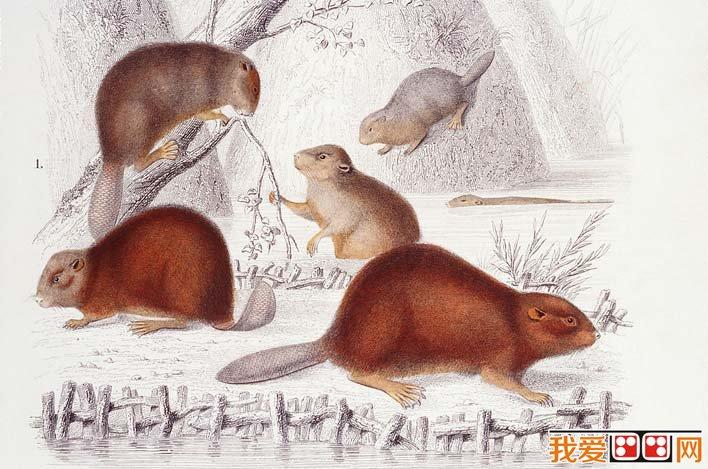 描画(06):小动物钢笔画-国外大师彩色钢笔素描画,各种动物彩色