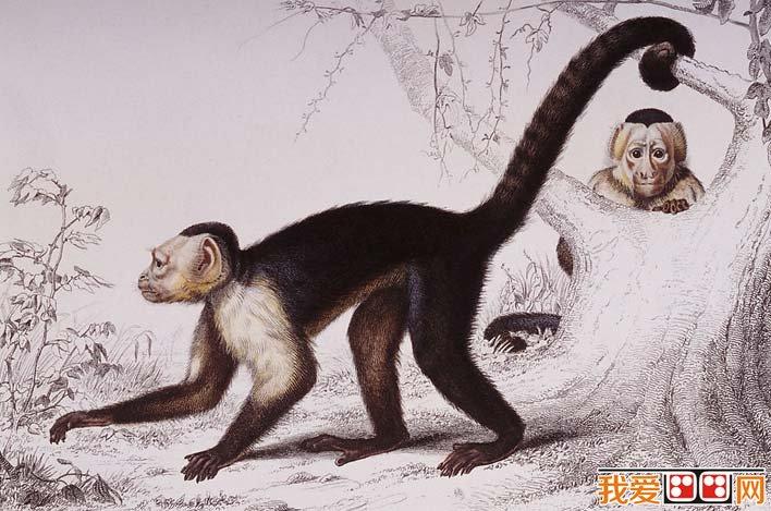 國外大師彩色鋼筆素描畫,各種動物彩色鋼筆畫圖片欣賞