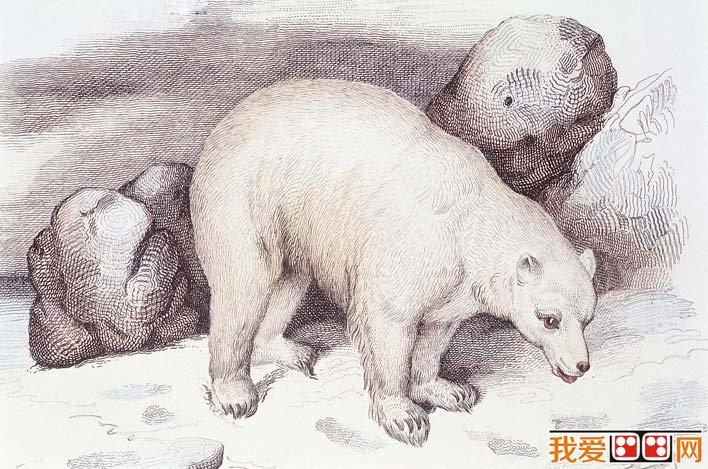 学画画 素描教程 素描风景 > 国外大师彩色钢笔素描画,各种动物彩色