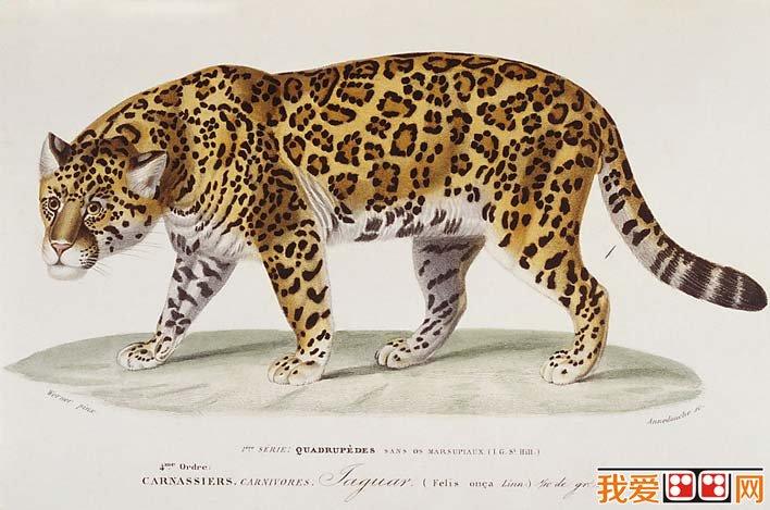 国外大师彩色钢笔素描画,各种动物彩色钢笔画图片欣赏