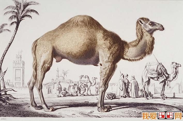国外大师彩色钢笔素描画,各种动物彩色钢笔画图片欣赏 12