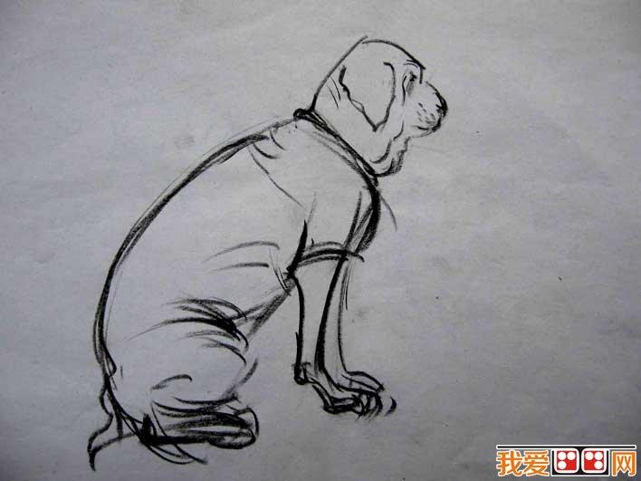 关于狗的速写图片 简练线条速写狗作品六副(2)