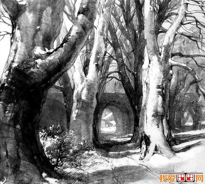各种各样素描树的写生作品23p