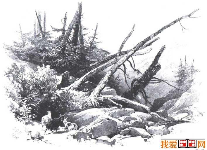 各种各样素描树的写生