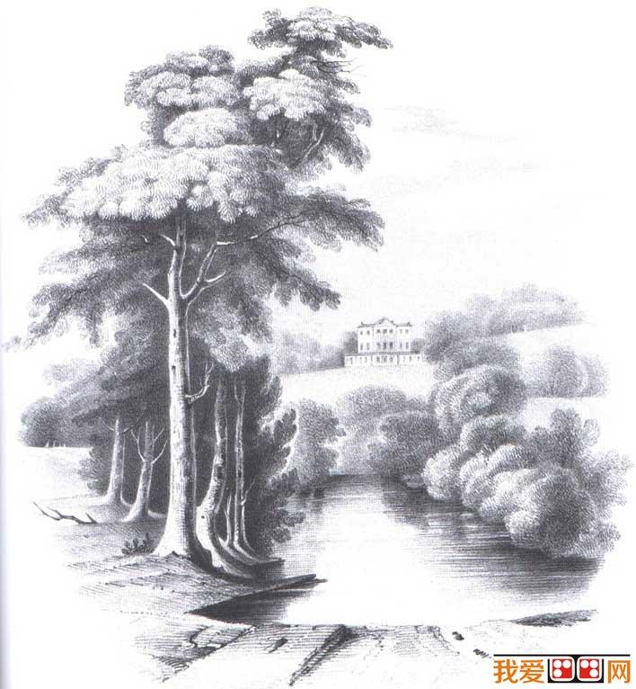 国外关于树的素描风景图片,各种各样素描树的写生