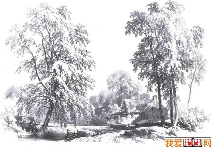 国外关于树的素描风景图片,各种各样素描树的写生作品23P 7