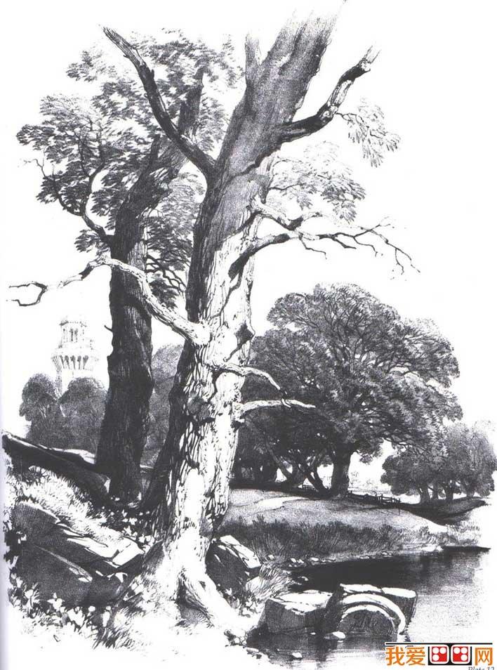 国外关于树的素描风景图片,各种各样素描树的写生作品23P