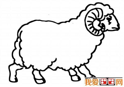 山羊简笔画图片-教你画羊 绵羊简笔画教程 4