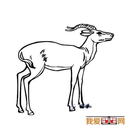 羚羊简笔画图片