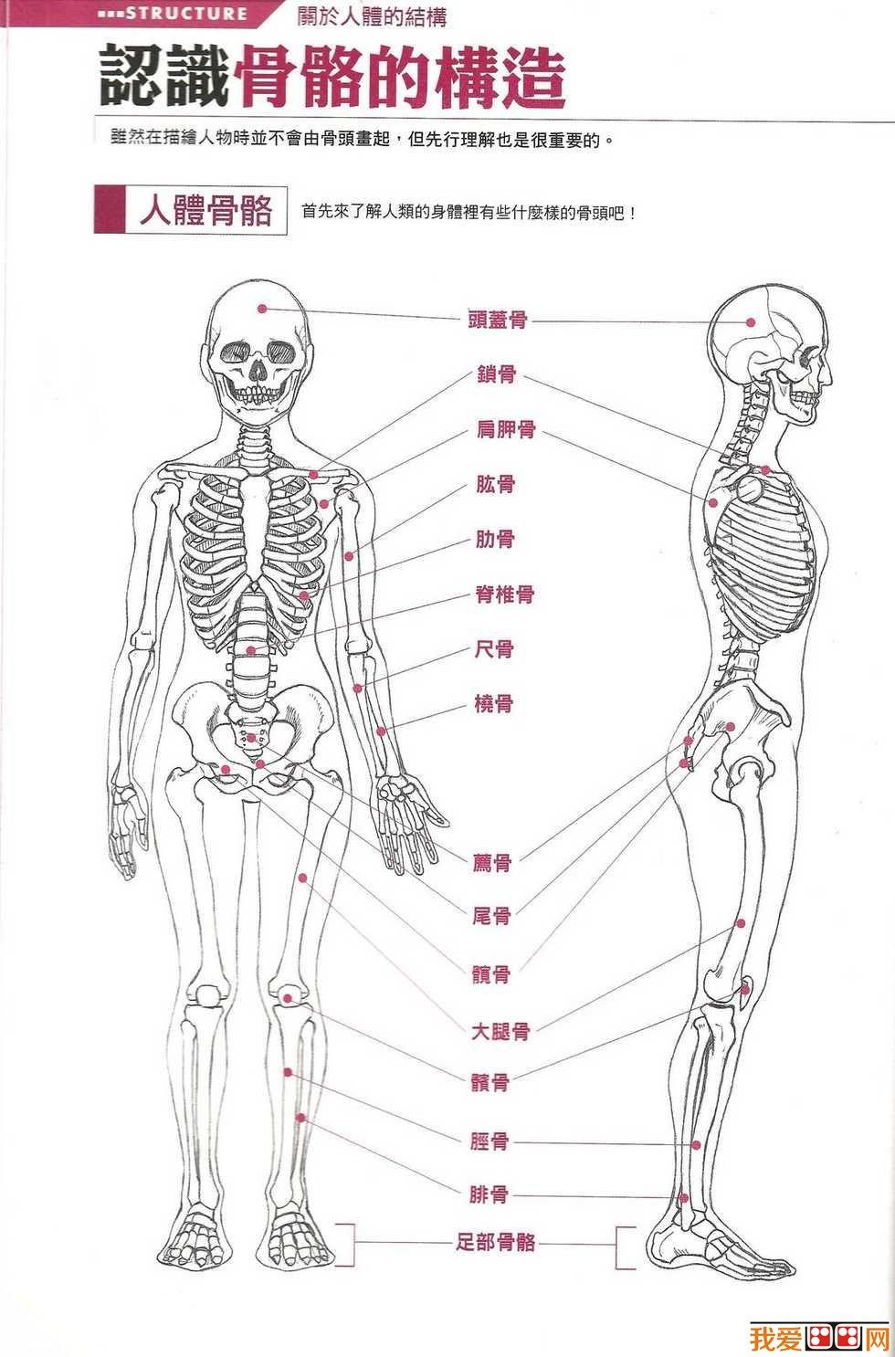 脚的结构名称图解