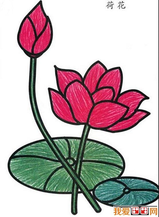 儿童画水彩画作品 漂亮的荷花