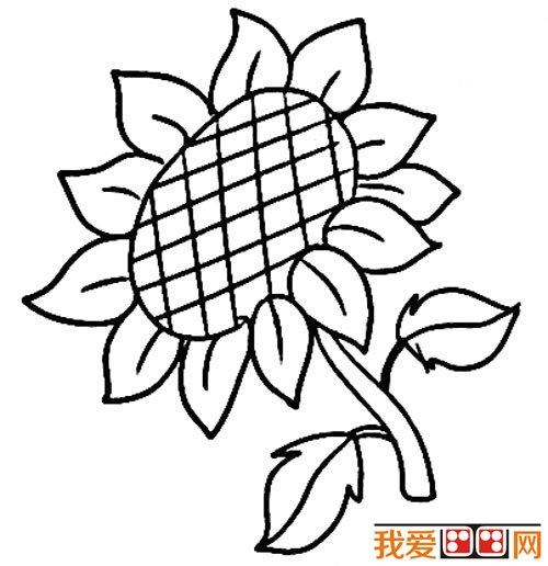 幼儿简笔画 向日葵简笔画教程
