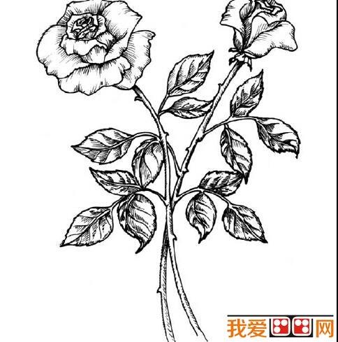 为大家推荐的玫瑰花简笔画吧