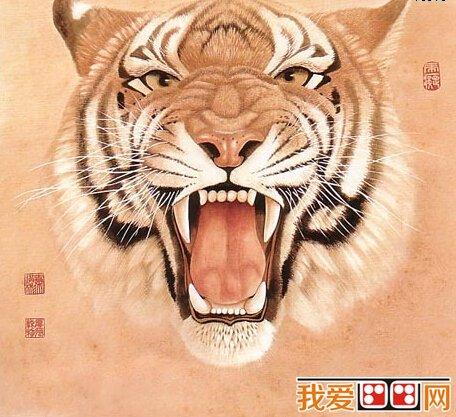 壁纸 动物 虎 老虎 桌面 456_417