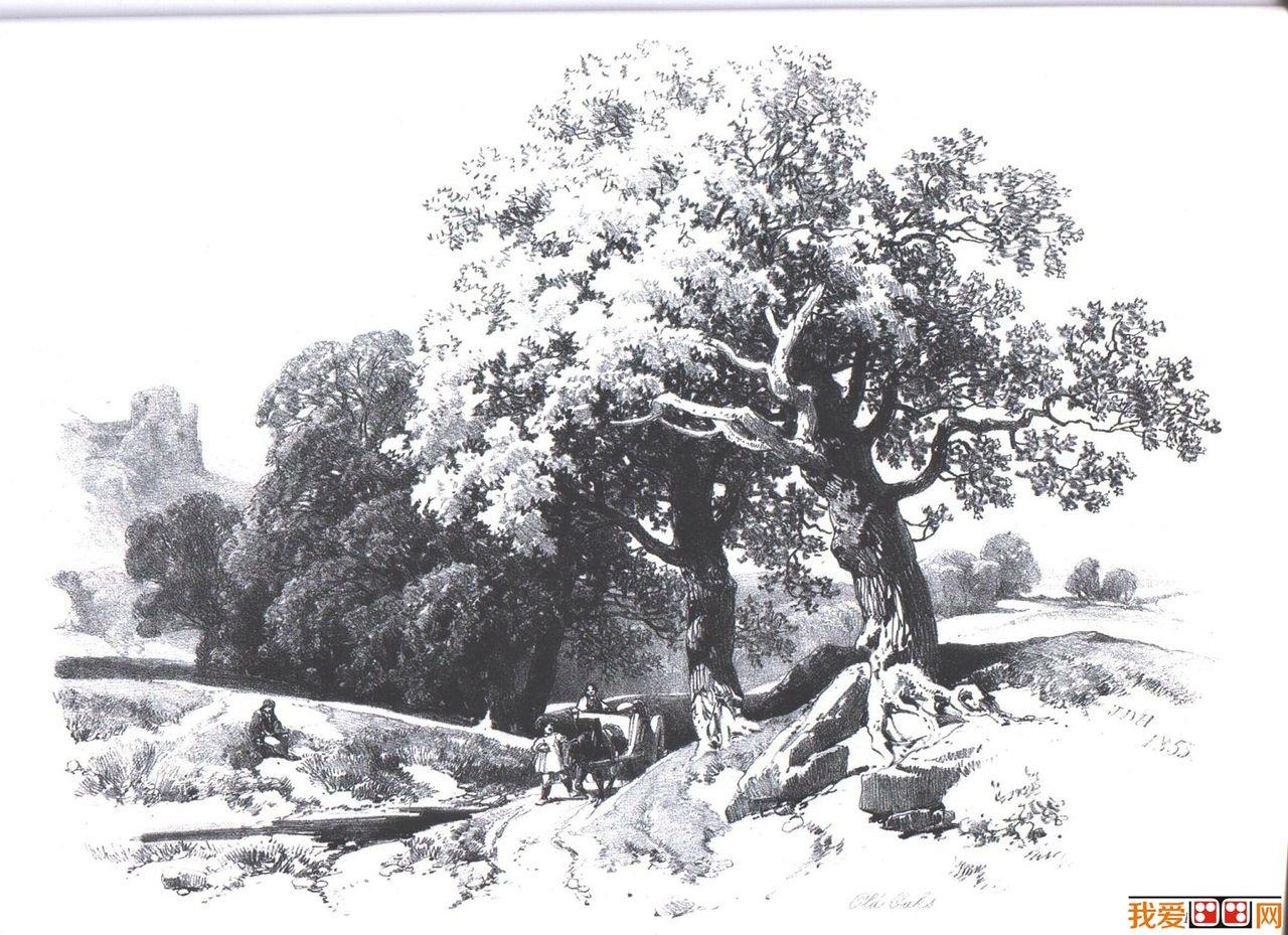逼真树木风景素描作品欣赏图片