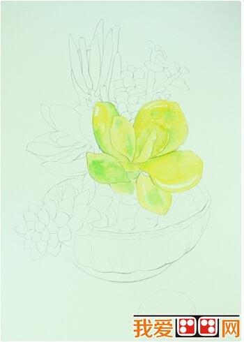 学画画 水彩画教程 > 多肉植物水彩画教程详解      多肉植物小巧可爱
