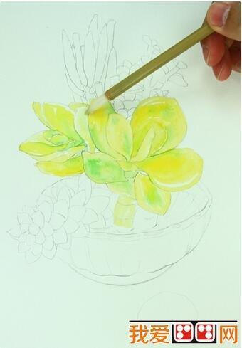 多肉植物水彩画教程详解