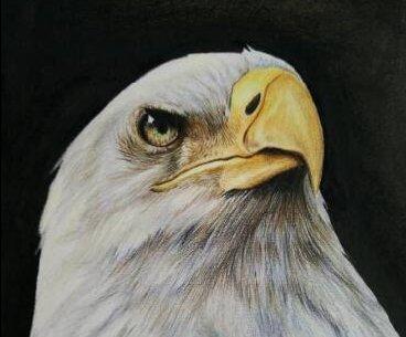 彩铅画花卉绘画教程 彩色铅笔画石蒜的手绘过程(15)