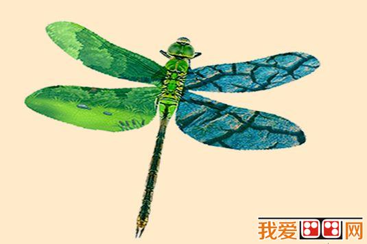 插画作品蜻蜓