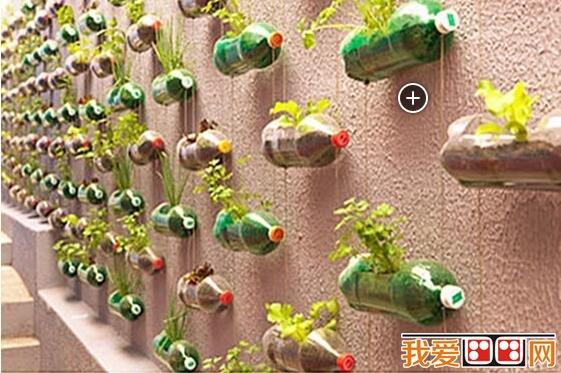 墙壁上的植物园diy手工制作教程_其他绘画教程_学画画