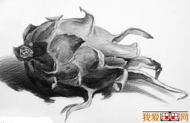 水果静物素描作品赏析:火龙果素描-优秀水果蔬菜素描作品赏析图片