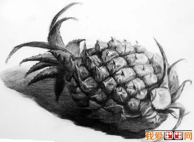 水果静物素描作品赏析:菠萝素描-优秀水果蔬菜素描作品赏析