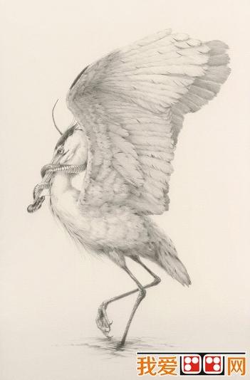 学画画 素描教程 素描动物 > 精美的禽鸟素描作品欣赏(2)