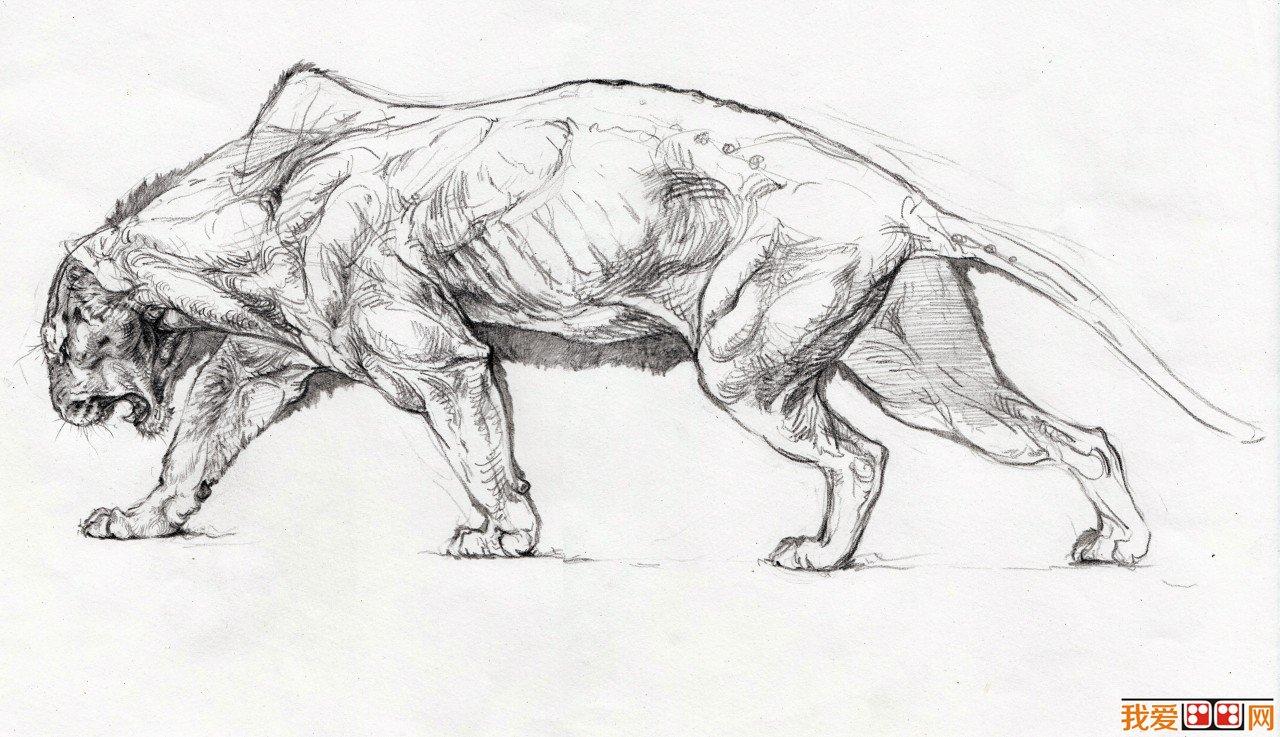 学画画 速写教程 速写人物 > 速写教程:动物画速写技法步骤教程