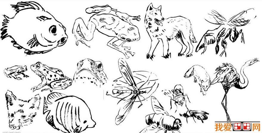 速写教程:动物画速写技法步骤教程