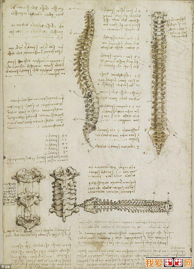 达芬奇人体解剖素描手稿作品欣赏